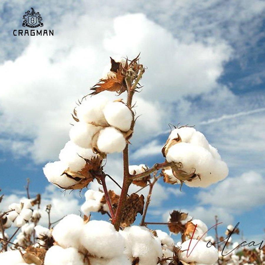Cotton là gì?