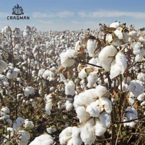 Đặc điểm của Cotton